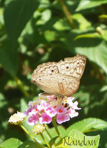 Butterfly-cropped