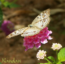 Pink-with-butterfly
