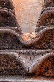Eine kleine Katze mit rotem Fell liegt entspannt in einem Kunstwerk aus Holz von Gina Koch