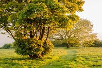 Cissbury Spring Green by Malc McHugh