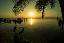 Pelican-sunset