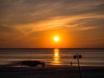 Seagulls in the sunset von Nicole Bäcker