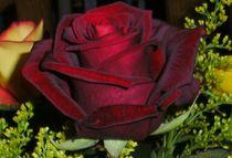 Blume der Liebe by Silvana Schreyer