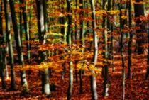 Zauberwald 4 von Peter Hebgen