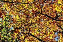 Zauberwald 7 von Peter Hebgen