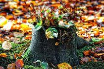 Zauberwald 11 von Peter Hebgen