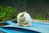 Eine kleine Katze sitzt auf einer blauen Mülltonne von Gina Koch