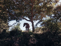 The horse by Salvatore Russolillo