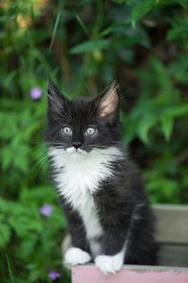 Dsc-1542-dot-mc-kitten4-05-16