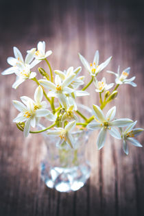Star of Bethlehem von tr-design