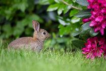 kleiner Blumenfreund von Susanne Schröder