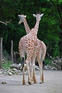 Tierpark-hellabrunn-24