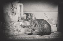 Bengal Kitten / 17 von Heidi Bollich