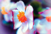 Colors von Nicole Frischlich