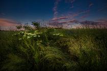 gräser am abend ... von Manfred Hartmann