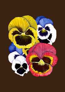 Pansies by Kris  Efe