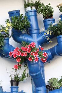 Blumen. von Bernd Eglinski
