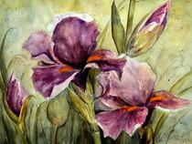 'Iris' von Chris Berger