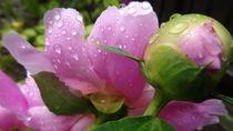 Regentropfen auf Sommerblüte  von Art of Irene S.