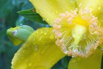Yellow-in-the-rain