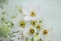 White Flowers / 3 by Heidi Bollich