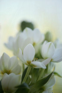 White Flowers / 1 by Heidi Bollich