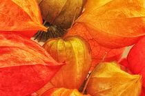 Physalis orange, gelb und grün von Gisela Peter