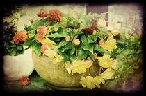 The-flowerpot