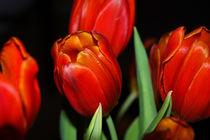 'Tulips' von Harvey Hudson