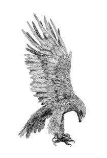 eagle by Condor Artworks