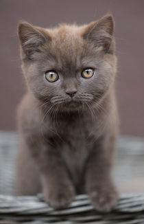 Dsc-4819-dot-bkh-kitten5-06-16
