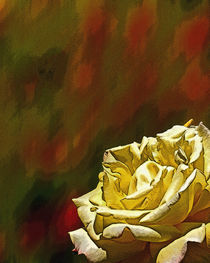 yellow rose by Michael Naegele