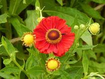 florales Sonnensystem by Zarahzeta ®