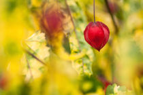 Kunterbunt by Martina Raab