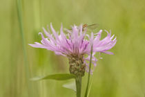 Summertime by Martina Raab