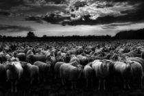 Schweigen der Lämmer by Kai Hormann