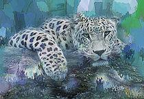 Leopard  von Galen Valle