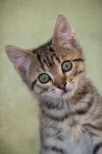Dsc-8448-dot-t-ekh-kitten4-06-16