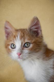 Dsc-8465-dot-t-ekh-kitten1-06-16