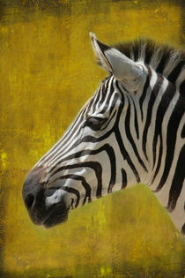 Zebra-hochformat-portrait