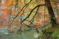 'Begrabt mein Herz an der Biegung des Flusses' von Thomas Matzl