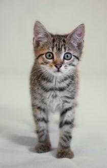 Kleine Katze / 6 by Heidi Bollich