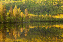 Beautiful green forest reflected in still lake by Horia Bogdan