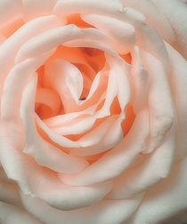 An English Rose by CHRISTINE LAKE