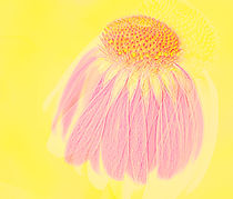 Echinacea in Pink by Linde Townsend