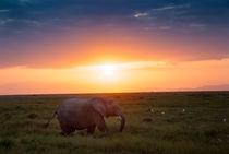 Elefant-5643