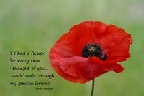 Remembrance-poppy-jpg