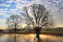 'Bäume am Fluss' von Bernhard Kaiser