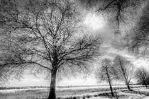 Trees-inf-3