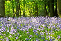 Blue Bells by May Kay